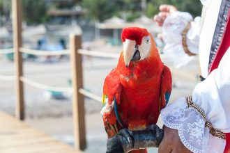 The Pirate's Parrot Pirate Ship Vallarta