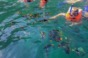 Things to do with Young Infants in Puerto Vallarta