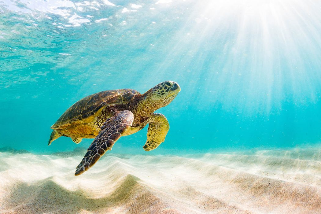 Sea Turtle Nests In Mexico: What to Know