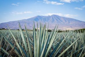 Mexico and Tequila – Passion and Flavor